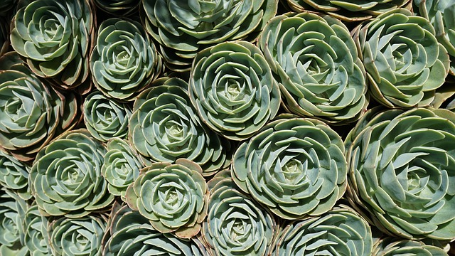 Succulents center.jpeg
